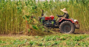 Farm Bill Signed! Hemp and CBD are Now Federally Legal