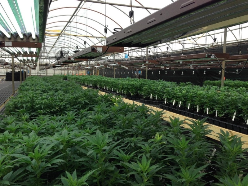 organic hemp large warehouse